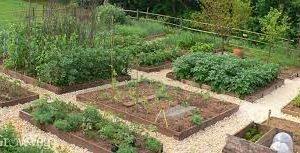 Guide to Landscaping Your Vegetable Patch